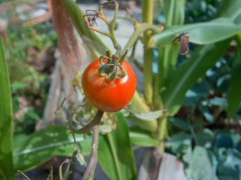 jardinage-1