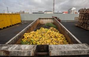 Benne de bananes jetées au Marché d'Intérêt National (MIN) de Nantes