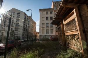 Ruches urbaines à La ruche de Croix Rousse